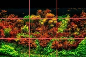 Read more about the article How To Design Aquascape Aquarium Using The Rules and Layouts