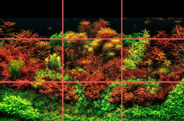 How To Design Aquascape Aquarium Using The Rules and Layouts