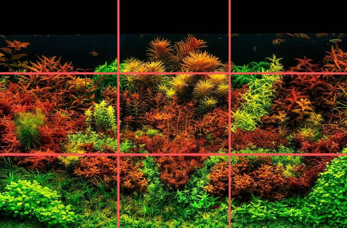 You are currently viewing How To Design Aquascape Aquarium Using The Rules and Layouts