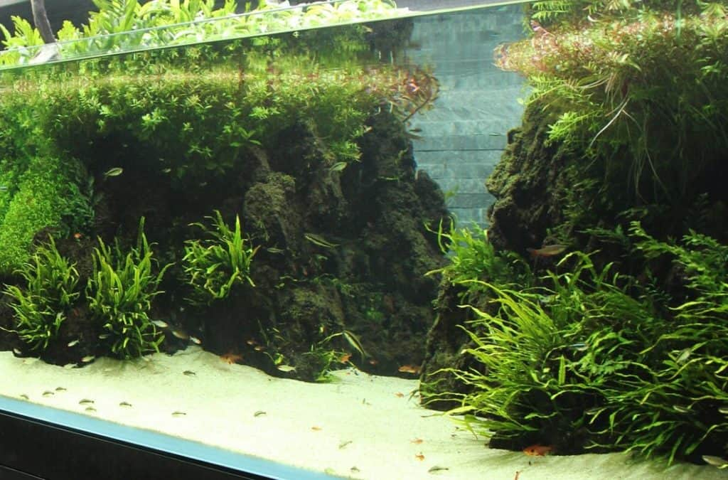 In 6 Steps: Build Your First Aquascape Aquarium For Beginners