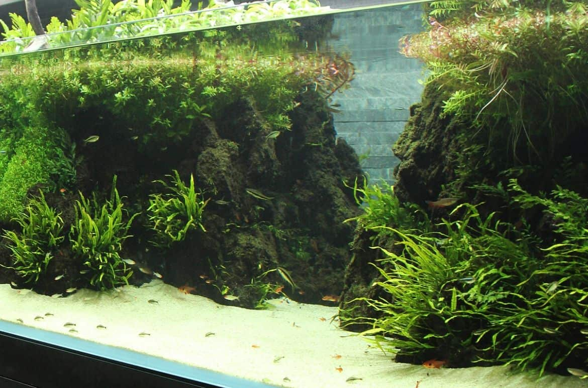 You are currently viewing In 6 Steps: Build Your First Aquascape Aquarium For Beginners