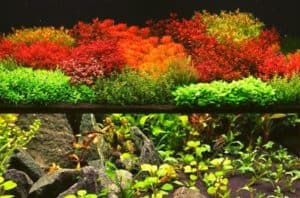 Read more about the article Dutch Style Aquascape Or Japanese Style Aquascape Which Is Better