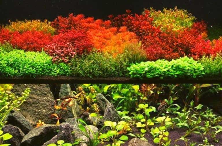 Dutch Style Aquascape Or Japanese Style Aquascape Which Is Better