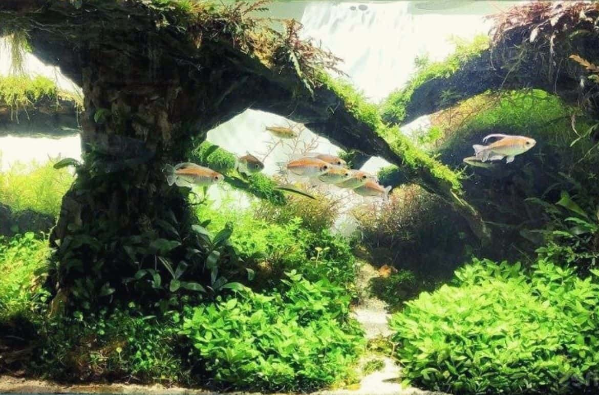You are currently viewing 7 Best Plants For Natural Style Aquascape Aquarium For Beginners