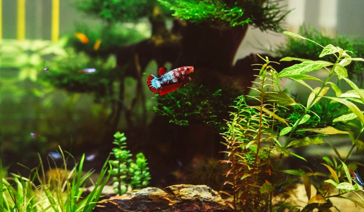 Read more about the article Aquascape Freshwater Aquarium a Detailed Guide for Beginners