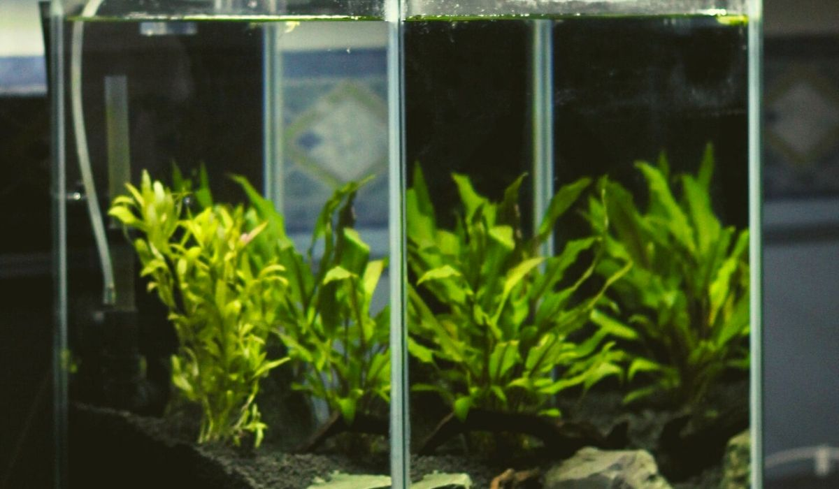 You are currently viewing How To Choose Aquarium Tank For Aquascaping with 5 examples