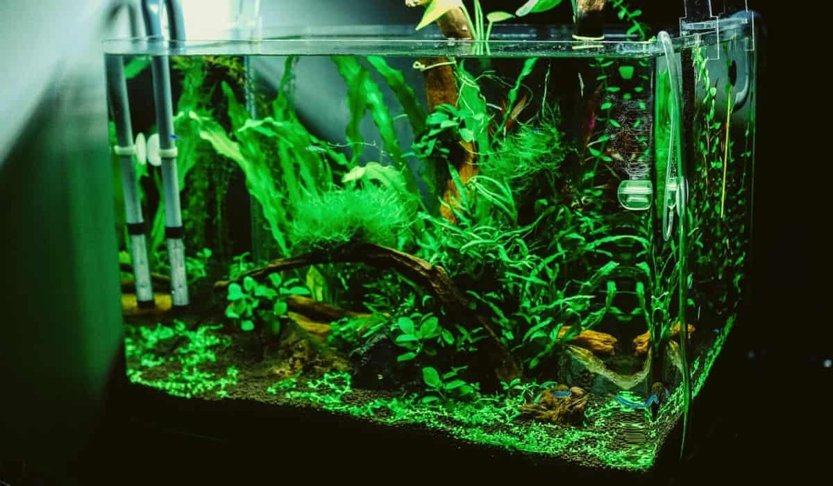 You are currently viewing Nano Low Tech planted aquarium tank 3 things you need to know
