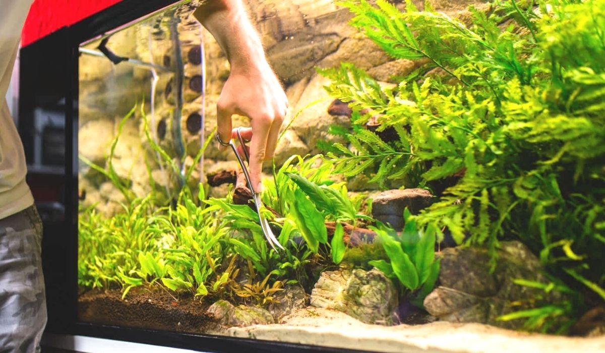You are currently viewing How do you maintain an aquascape tank on Daily, Weekly, and Monthly Basis
