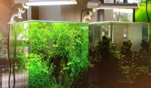 What accessories you need to build an aquascape