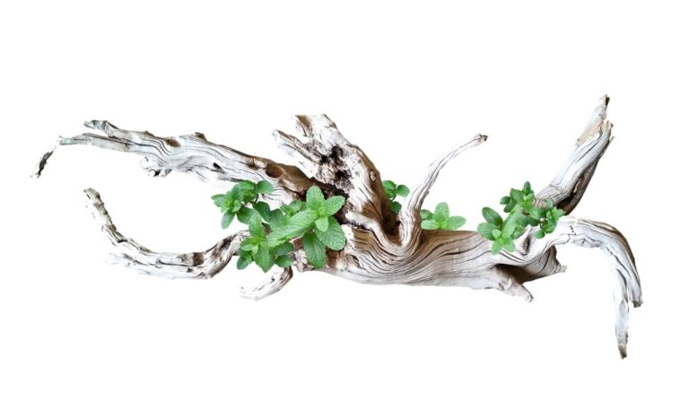 What are the Benefits of Driftwood in Aquascape Aquarium in 2021