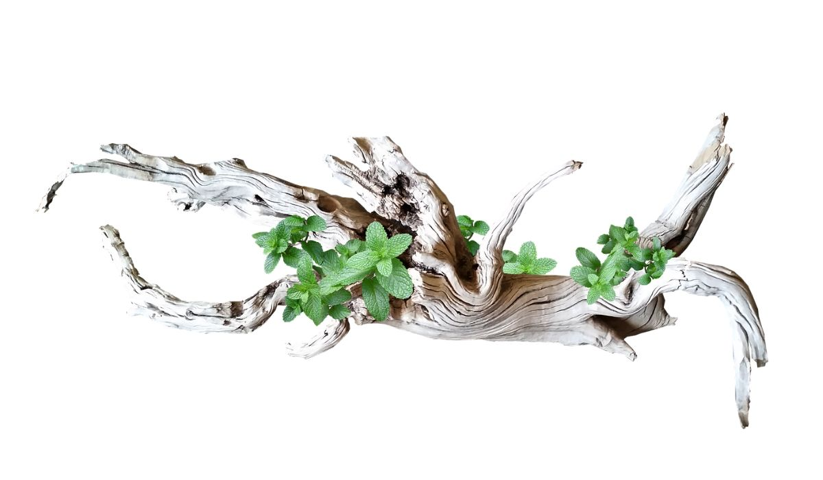 You are currently viewing What are the Benefits of Driftwood in Aquascape Aquarium in 2021