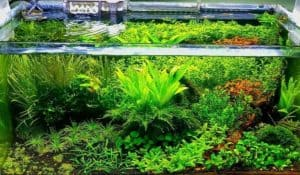 Read more about the article What is low-tech and high-tech in aquascape aquarium?