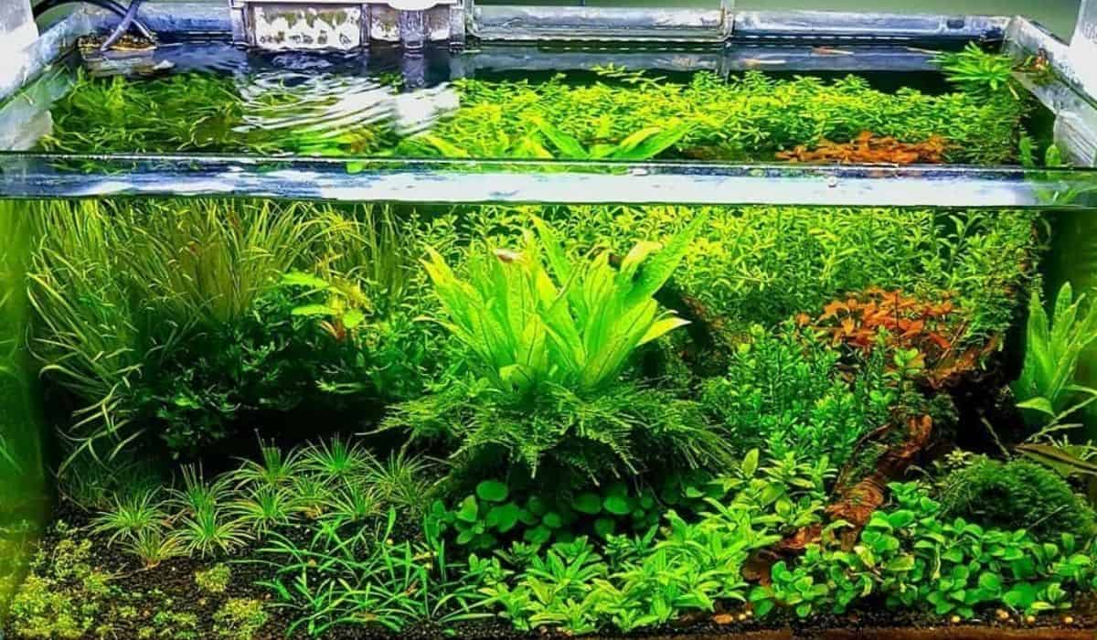 You are currently viewing What is low-tech and high-tech in aquascape aquarium?