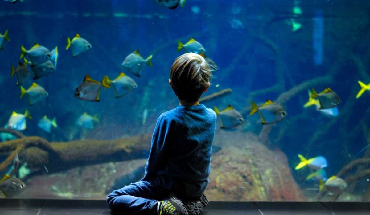 You are currently viewing Best Equipment for Tropical Fish Tank in 2021