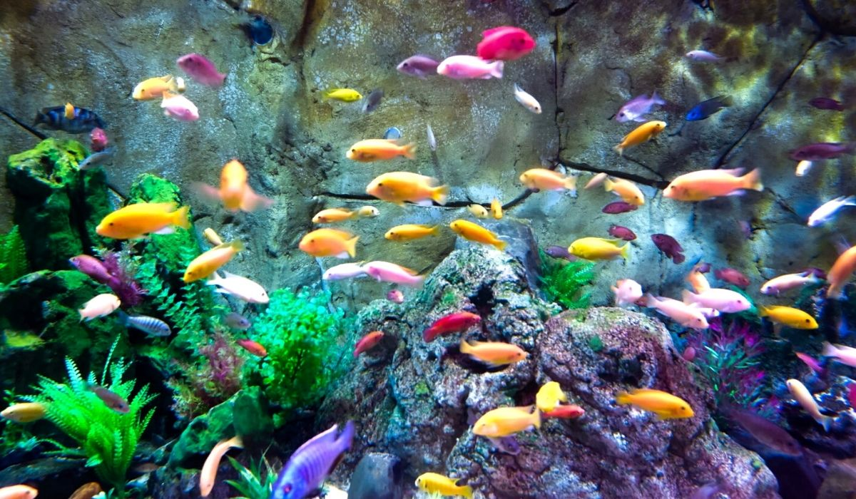 You are currently viewing Best Freshwater Aquarium Fish Combination