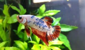 Read more about the article Can Betta Fish Live With Other Fish | 14 Helpful Tips  to keep them Safe