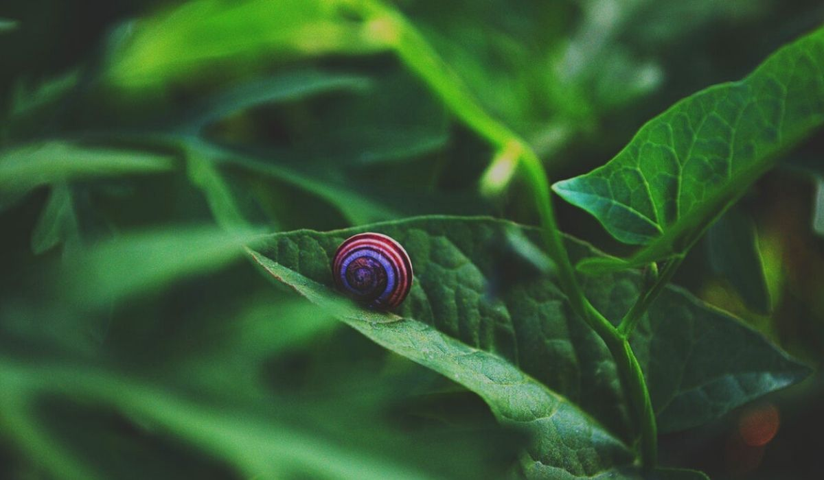 You are currently viewing Tired of Snails? Use these 7 Ways to get rid of Snails in Fish Tank