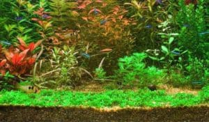 Read more about the article How to Plant Carpet Seeds in an Aquarium Aquascape