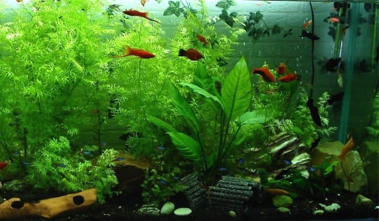 What Are The Easiest Tropical Fish To Keep in Aquarium