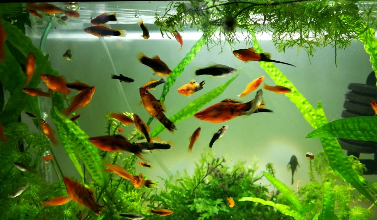 You are currently viewing 10 Best Freshwater Fish that go well with Shrimp in your Aquarium