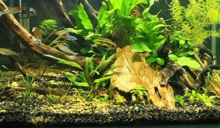 How to Clean Planted Aquarium Substrate