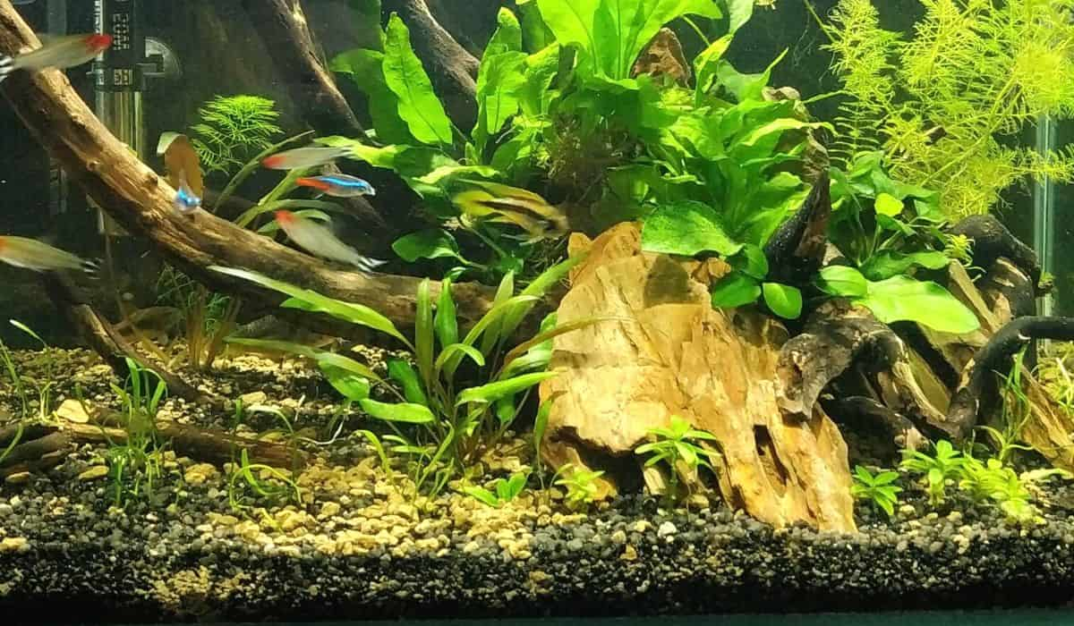 You are currently viewing How to Clean Planted Aquarium Substrate