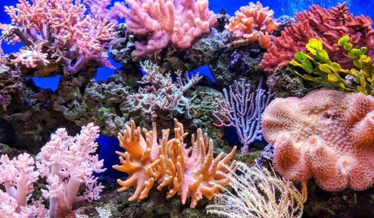 How to Lower Nitrate levels in Saltwater Aquarium