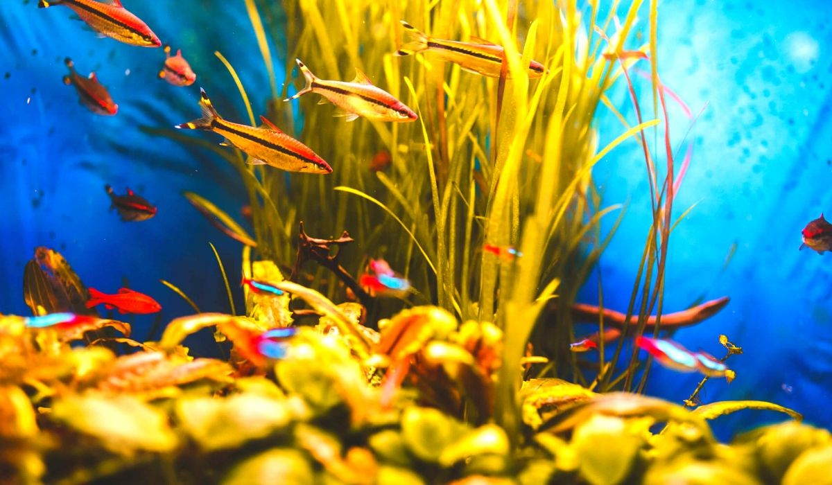 You are currently viewing 10 Tropical Fish that you can keep together in Aquarium Tank