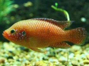 10 Tropical Fish that you can keep together