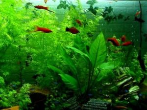 which is better saltwater or freshwater aquarium