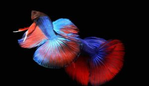 Read more about the article Betta Fish types and Price | Tail, Color, and Pattern