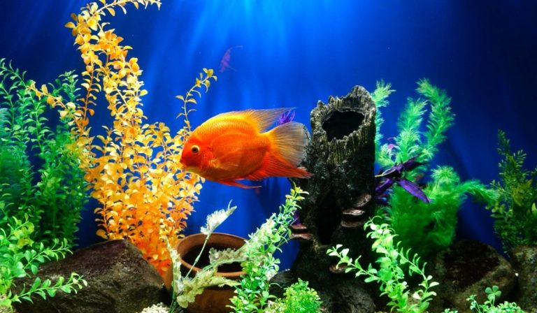 Which is better Saltwater or Freshwater aquarium   Pros & Cons