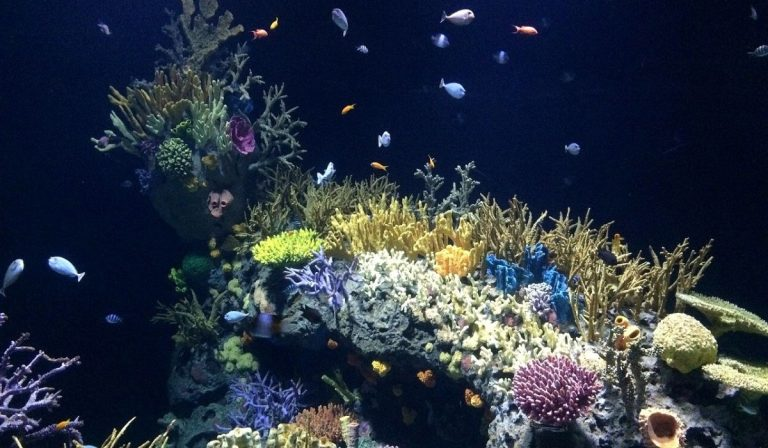Which Tanks are Easy to Maintain Saltwater Tanks or Freshwater Tanks