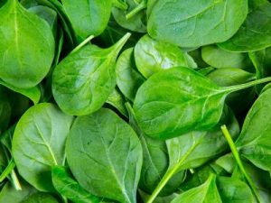 Best Vegetables To Feed Your Tropical Fishes