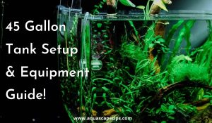 Read more about the article 45 gallon tank setup | Beginner's Guide