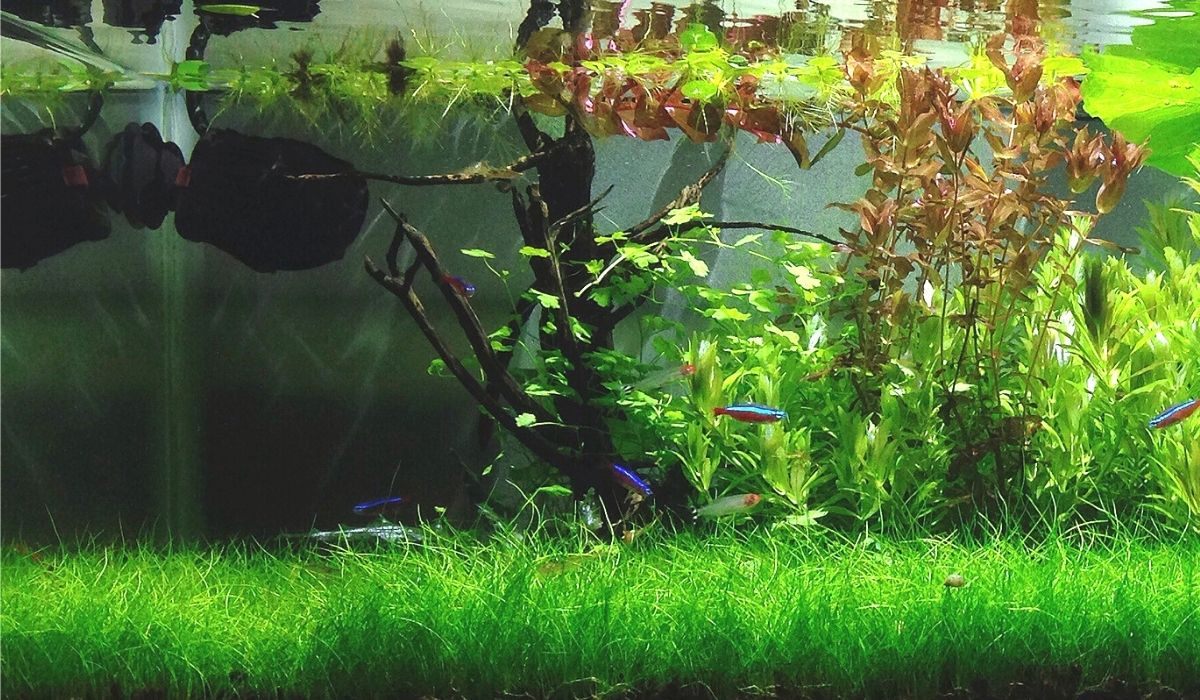 Read more about the article In 7 Step Build your Low Tech Planted Tank | Beginners Guide