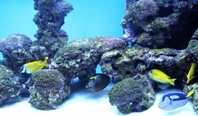 Nano Saltwater Reef Tank Setup | How to Build Beginners Guide
