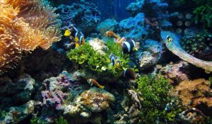 Read more about the article In 12 Step Build Saltwater Aquarium | In-depth guide for Beginners
