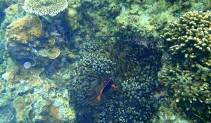 Read more about the article 10 Ways to Remove Dinoflagellates Reef Tank (Dino Algae)