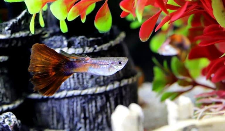 5 Ways to Lower Ph Levels in Fish Tank