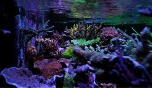 Read more about the article Nano Reef Tank Setup Beginners   Live Rocks and Fish Nano Reef Tank