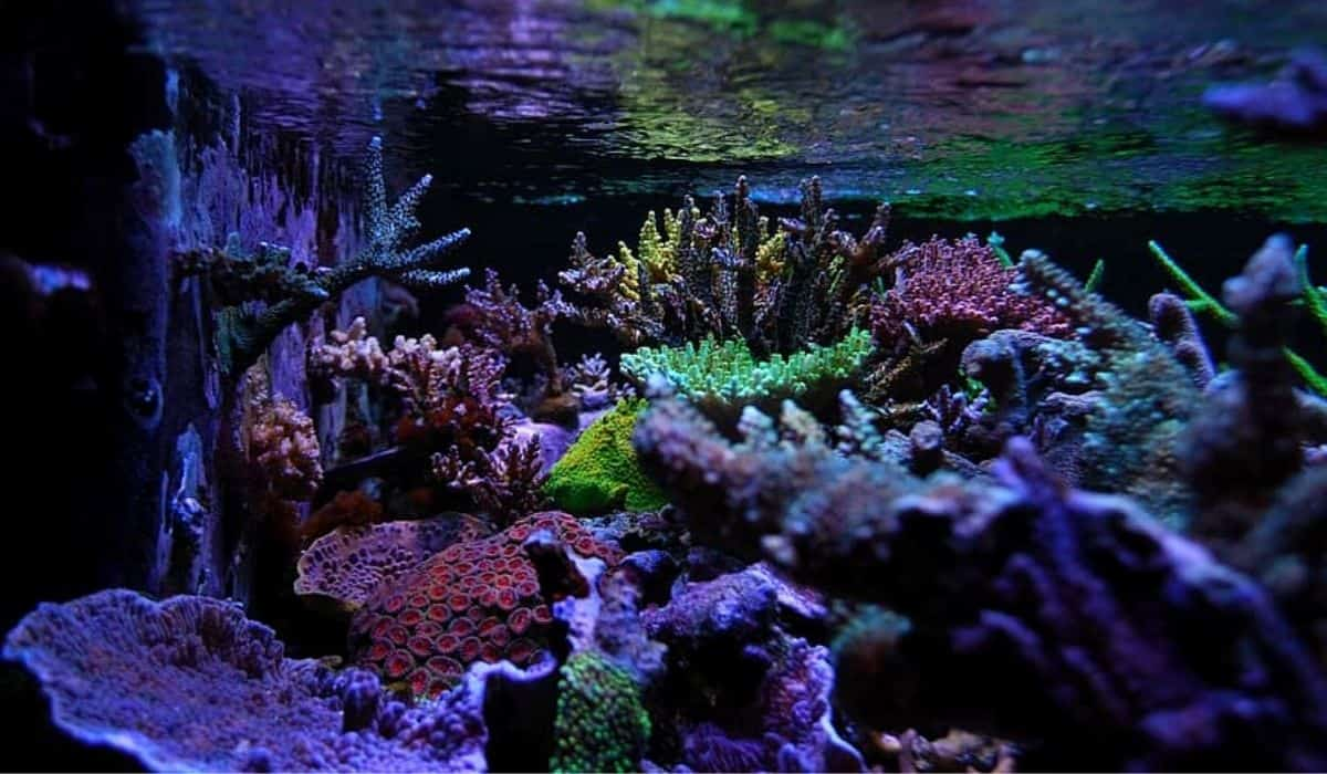Read more about the article Nano Reef Tank Setup Beginners | Live Rocks and Fish Nano Reef Tank