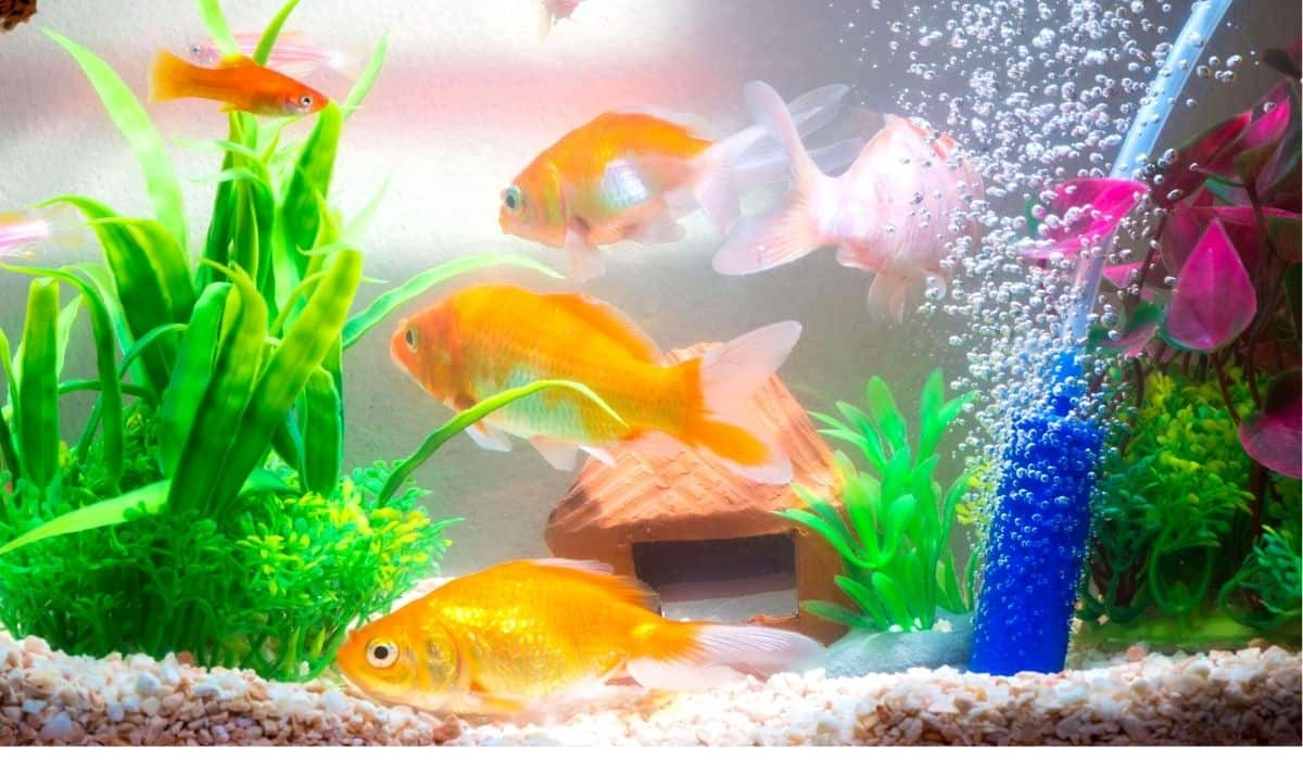 Read more about the article 8 Best Aquarium Filters for Large Tanks | Buyer's Guide for Aquarium Tanks